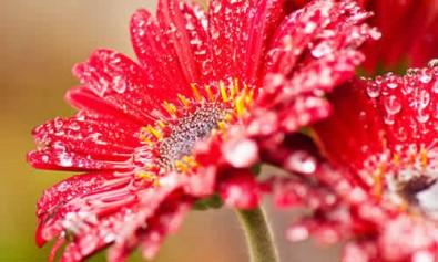 floricultura3