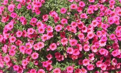 floricultura4