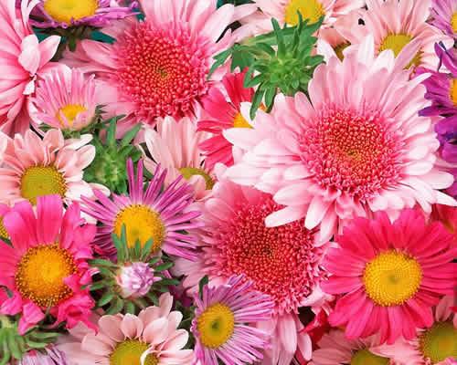 floricultura5